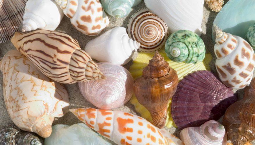 Bổ xung Canxi cho bé có cấu tạo giống Canxi trong vỏ sò, đá vôi