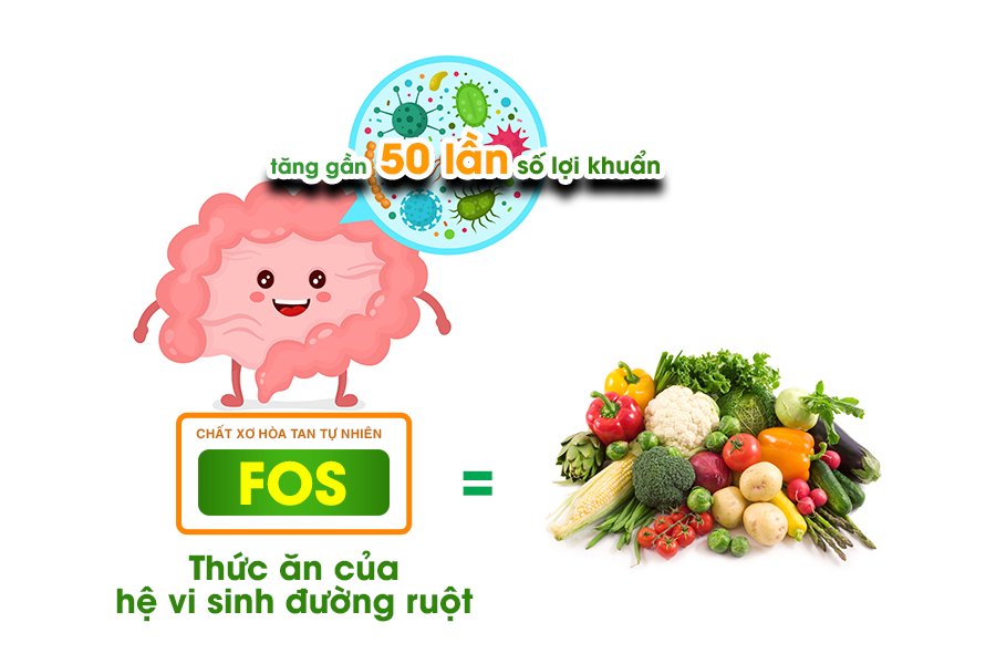 FOS - Thức ăn của hệ vi sinh đường ruột