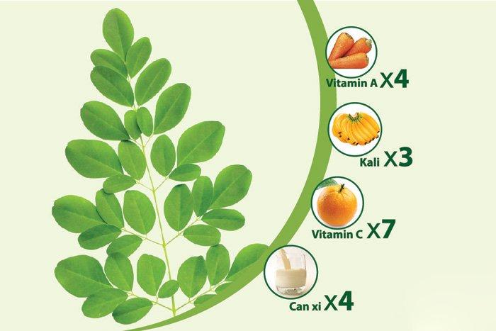Giá trị dinh dưỡng của bột chùm ngây